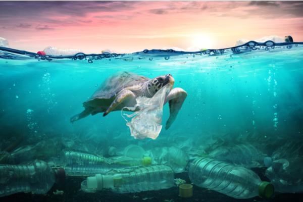 Protection des mers et océans : de nouvelles sanctions !